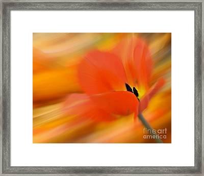 Tulip In Motion Framed Print