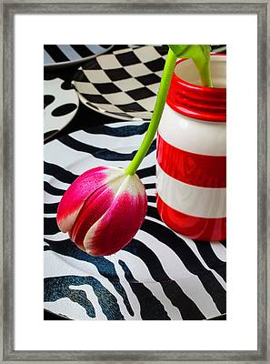 Tulip In Red And White Jar Framed Print