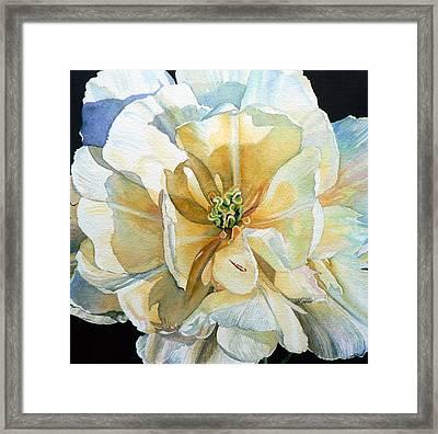 Tulip Intimate Framed Print
