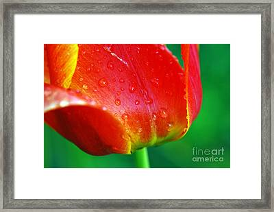 Framed Print featuring the photograph Tulip by Lila Fisher-Wenzel
