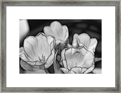 Tulip Line Study Framed Print by Kevin  Sherf