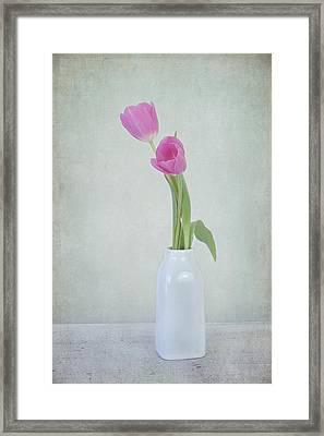 Tulip Love Framed Print