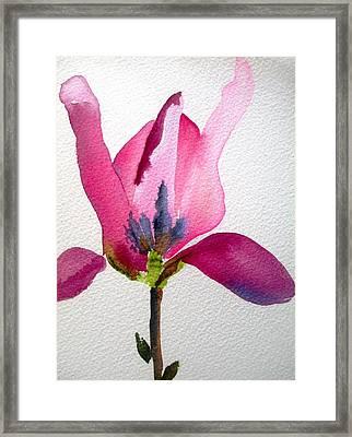 Tulip Magnolia Framed Print by Sacha Grossel