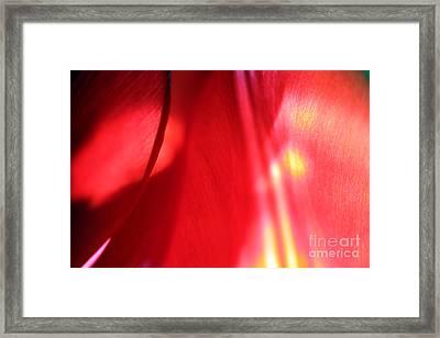 Tulip Mind Framed Print by Amanda Barcon