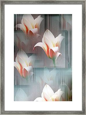 Tulip Multiplied Framed Print