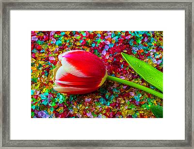 Tulip On Colored Glass Framed Print