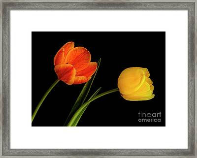 Framed Print featuring the photograph Tulip Pair by Scott Kemper