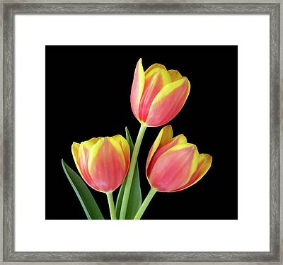 Tulip Passion Framed Print