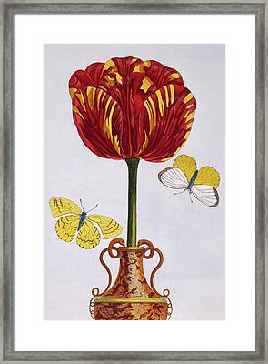 Tulip Framed Print by Pierre-Joseph Buchoz