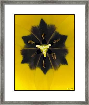 Tulip Pixie Framed Print by Daniel G Walczyk
