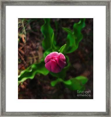 Tulip Rising Framed Print
