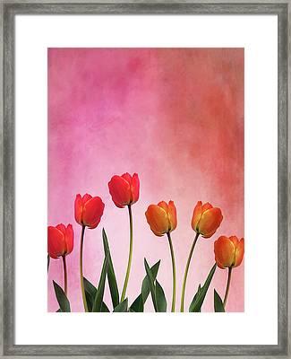 Tulip Six Framed Print