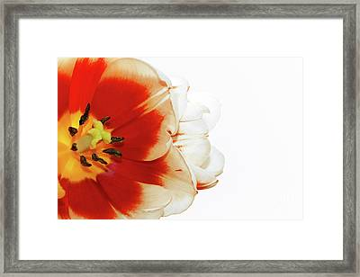 Tulip Statement Framed Print