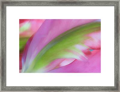Tulip Study Framed Print