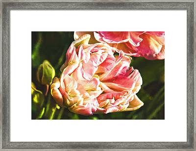 Tulip, The Perfect Love. Framed Print by ShabbyChic fine art Photography