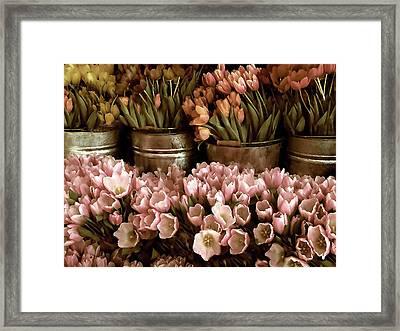 Tulip Tones Framed Print