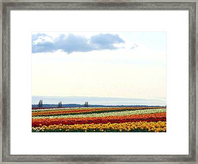 Tulip Town 13 Framed Print by Will Borden