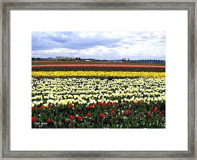 Tulip Town 4 Framed Print by Will Borden
