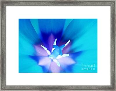 Tulip Treasure Framed Print