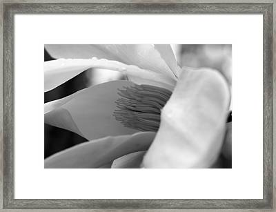 Tulip Tree Bloom Framed Print by Scott Gould
