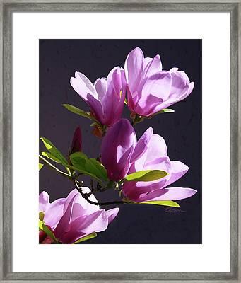Tulip Tree Framed Print by Elorian Landers