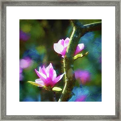 Framed Print featuring the photograph Tulip Tree by James Barber