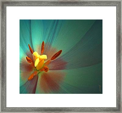 Framed Print featuring the photograph Tulip Trends by Gwyn Newcombe