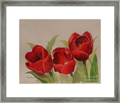 Framed Print featuring the drawing Tulip Trio by Phyllis Howard