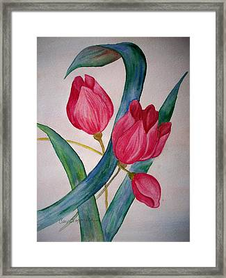 Tulip Tulip Framed Print by Cary Singewald
