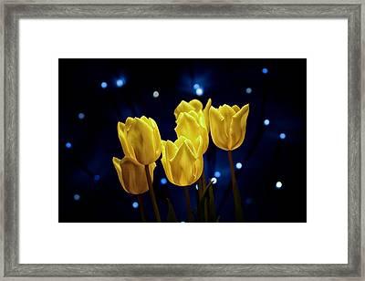 Tulip Twinkle Framed Print