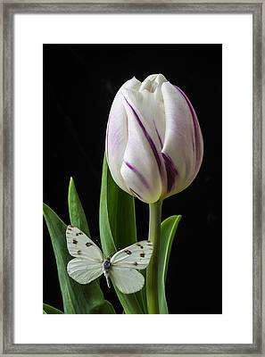 Tulip With White Butterfly Framed Print