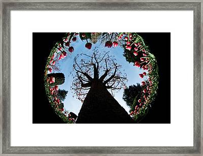 Tulip Wonderland L550 Framed Print by Yoshiki Nakamura