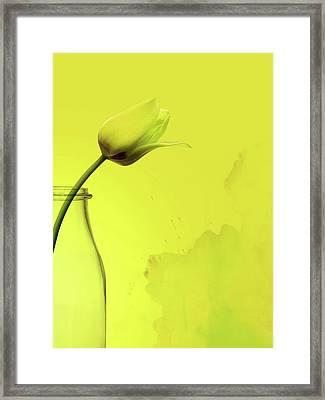 Tulip Yellow Framed Print