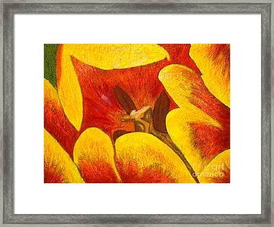 Tulipan Anaranjado Framed Print by Karla Kernz