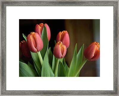 Tulips 2016 Framed Print