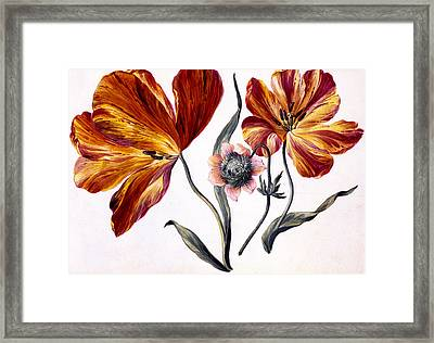 Tulips And Anenome Framed Print