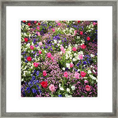 Tulips And Other Colorful Flowers In Spring Framed Print by Matthias Hauser