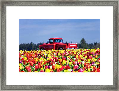 Tulips And Red Chevy Truck Framed Print