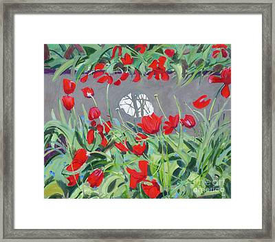 Tulips And Reflection Framed Print by Andrew Macara
