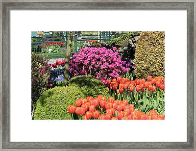 Tulips And Rhodies Framed Print