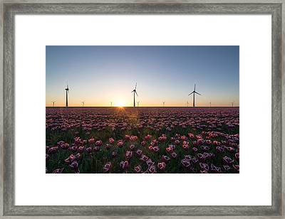 Tulips And Windmills Framed Print