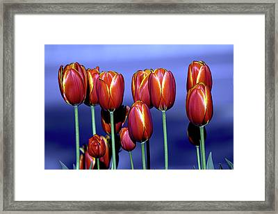 Tulips At Attention Framed Print