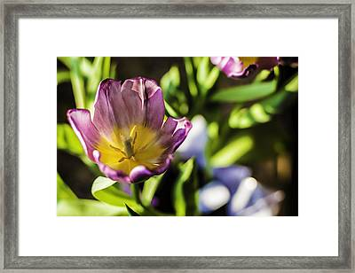 Tulips At The End Framed Print