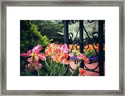 Tulips At The Garden Gate Framed Print