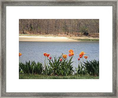 Tulips By The Bay Framed Print