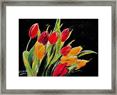 Tulips Colors Framed Print by Khalid Saeed
