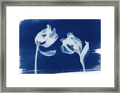 Tulips  Framed Print by Elspeth Ross