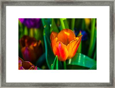 Framed Print featuring the photograph Tulips Enchanting 44 by Alexander Senin