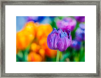 Framed Print featuring the photograph Tulips Enchanting 46 by Alexander Senin