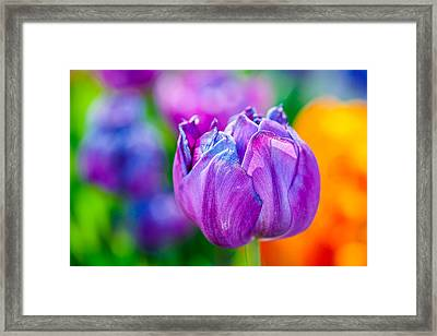 Framed Print featuring the photograph Tulips Enchanting 47 by Alexander Senin
